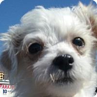 Adopt A Pet :: Bundle of Angels - El Cajon, CA