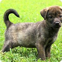 Adopt A Pet :: Bandit~adopted! - Glastonbury, CT