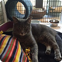 Adopt A Pet :: Kiro - Chicago, IL