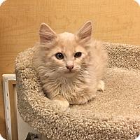 Adopt A Pet :: Tucson - Riverside, CA