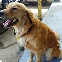 Adopt A Pet :: Bella V - BIRMINGHAM, AL