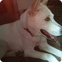 Adopt A Pet :: Luna Child and Cat Friendly! - Rowayton, CT