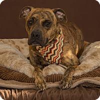 Adopt A Pet :: Tigger - Flint, MI