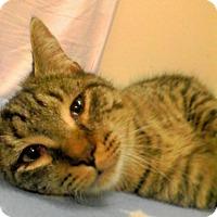 Adopt A Pet :: Clyde - Trevose, PA