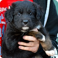Adopt A Pet :: Autumn - Simi Valley, CA