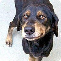 Adopt A Pet :: Buddy - NEEDS FOSTER! - Washington, DC