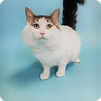 Adopt A Pet :: Avalon - Monroe, MI
