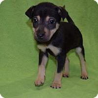 Adopt A Pet :: Nesbitt - Sacramento, CA