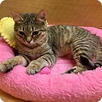 Adopt A Pet :: Shelia - Mebane, NC