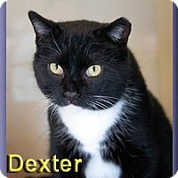 Adopt A Pet :: Dexter - Aldie, VA