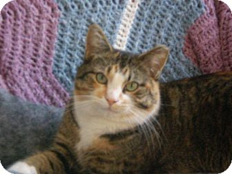 Domestic Shorthair Cat for adoption in Fairborn, Ohio - Bits