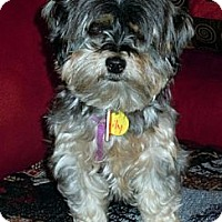 Adopt A Pet :: Lily - Toronto, ON