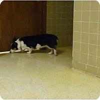 Adopt A Pet :: Kitt - Inola, OK