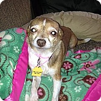 Adopt A Pet :: Reya - Commerce City, CO