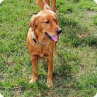 Adopt A Pet :: Sasha - Murdock, FL