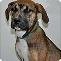 Adopt A Pet :: Noel - Port Washington, NY
