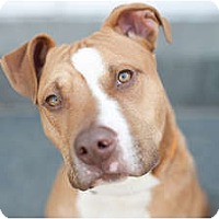 Adopt A Pet :: Jerome - Reisterstown, MD
