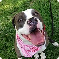 Adopt A Pet :: Wiggles - Alta Loma, CA