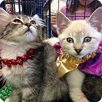 Adopt A Pet :: Lotus - San Ramon, CA