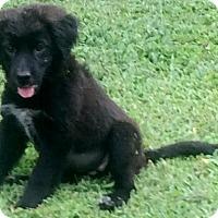 Adopt A Pet :: Jada - Smyrna, GA
