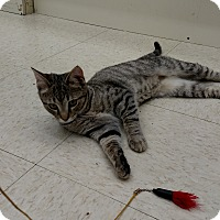 Adopt A Pet :: Twinkie - Warren, OH