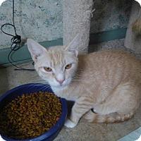 Adopt A Pet :: Kulla - Manchester, CT