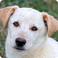 Adopt A Pet :: Fredrick - Bedminster, NJ