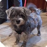 Adopt A Pet :: Colette - N. Babylon, NY