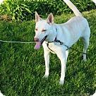 Adopt A Pet :: Reba