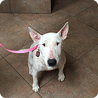Adopt A Pet :: Ladybird - Houston, TX