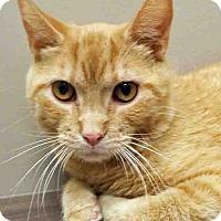 Adopt A Pet :: Donny - Shorewood, IL
