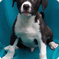Adopt A Pet :: Truman - Waldorf, MD
