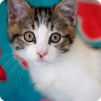 Adopt A Pet :: Sharla - Santa Rosa, CA