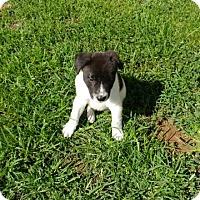 Adopt A Pet :: Ethan - Flemington, NJ