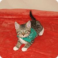 Adopt A Pet :: Tobias - Jackson, MS