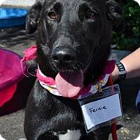 Adopt A Pet :: Fernie - Adopted! - San Diego, CA