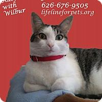 Adopt A Pet :: A Young Female: FERN - Monrovia, CA