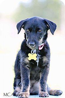 Terrier (Unknown Type, Medium) Mix Puppy for adoption in Salt Lake City, Utah - Tam tam