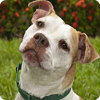 Adopt A Pet :: BRIN - West Palm Beach, FL