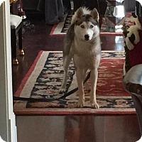 Adopt A Pet :: Kino - Roswell, GA