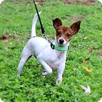 Adopt A Pet :: PUPPY HOPE - richmond, VA