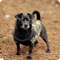 Adopt A Pet :: Roxanne - Marietta, GA