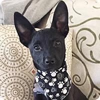 Adopt A Pet :: Cleo - San Diego, CA