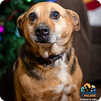 Adopt A Pet :: Nyla - Evansville, IN