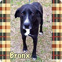Adopt A Pet :: Bronx - Pomfret, CT