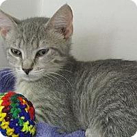 Adopt A Pet :: Windy - Seminole, FL