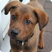 Adopt A Pet :: Skippy - Marlton, NJ
