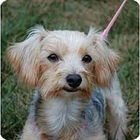 Adopt A Pet :: Maya - Charlotte, NC