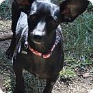 Adopt A Pet :: Diego