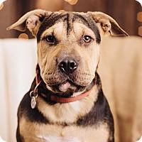 Adopt A Pet :: Fletcher - Portland, OR